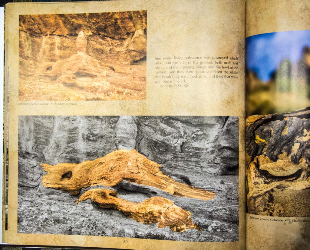 Mudfossils, creationism